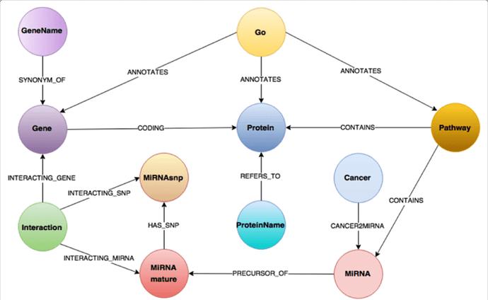 BioGraphDB-scheme-The-graph-data-model-of-BioGraphDB-consists-of-a-set-of-nodes-vertices